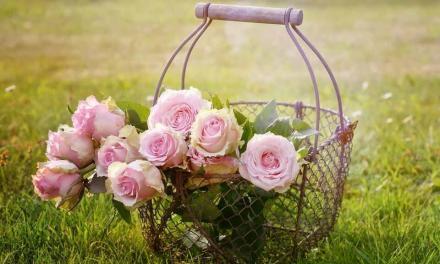 Deliver flowers in spring: 4 spring flowers
